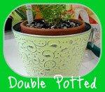 Lemon Button Fern Double Potted