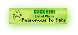 Plants Poisonous to Cats List