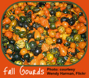 Bounty of gourds for the Indoor Gardener decor