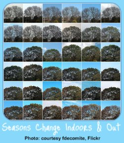 Garden Calendar through the Seasons