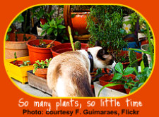 Cat Safe Houseplants - So Many Choices
