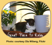 Benefit of Houseplants: Cat Relaxing in Window