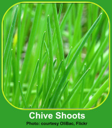 Indoor Gardener Herb Photos of Chives