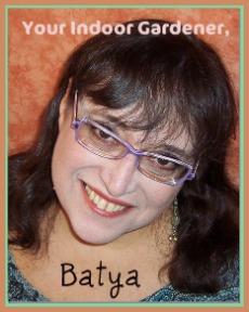 Photo of your indoor gardener, Batya