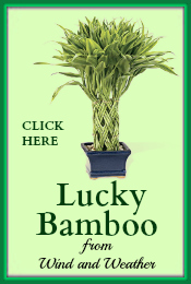 Lucky Bamboo Wind and Weather