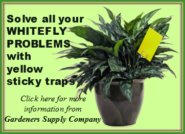 Click to purchase Whitefly Sticky Traps from Gardeners Supply Co