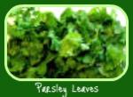 Parsley in the Italian Herb Garden