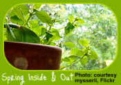 Healthy houseplants indoors and out.