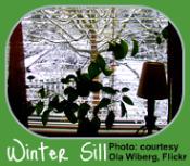 Winter Garden Calendar-Plant on Windowsill