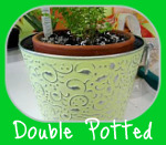 Lemon Button Fern Double Potted
