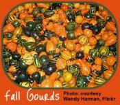 Bounty of gourds for the Indoor Gardener decor