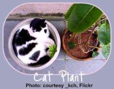 cat safe houseplants for the indoor gardener