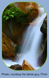 Fern Life Cycle Waterfall Environment