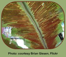 Fern Life Cycle depends on spores.