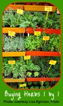 Choosing Plants as an Indoor Herb Garden Gift