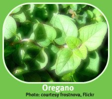 Photo of Indoor Herb Garden Oregano