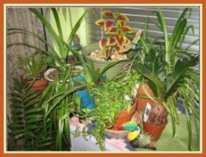 A group of plants in Batya's collection