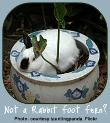 Toxic Houseplants unsafe for pets.