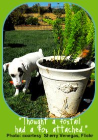 Foxtail is one of the plants poisonous to dogs.