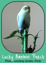 Toxic Houseplants affect pet birds, also.