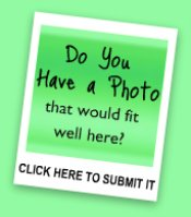 Do have photos of springtails?